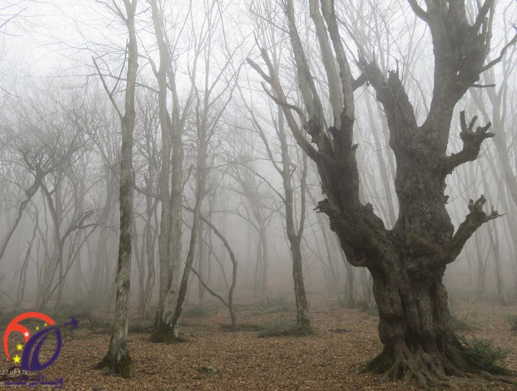7 دلیل برای سفر به جنگل الیمستان
